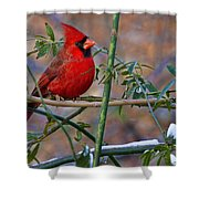 Christmas Color Shower Curtain