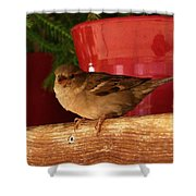 Christmas Finch Shower Curtain