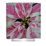 Christmas Floral Shower Curtain