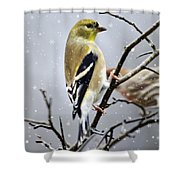 Christmas Goldfinch Shower Curtain by Christina Rollo