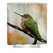 Christmas Humming Bird Shower Curtain