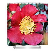 Christmas In A Flower Shower Curtain