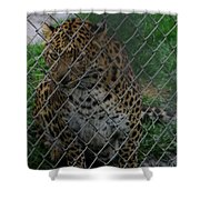 Christmas Leopard II Shower Curtain