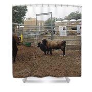 Christmas Petting Farm Shower Curtain