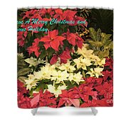 Christmas Poinsettias  Shower Curtain