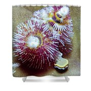 Christmas Tree Worms 1 Shower Curtain