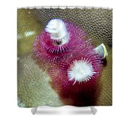 Christmas Tree Worms 2 Shower Curtain