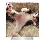 Christopher Paws Up Shower Curtain