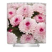Chrysantemum Pink Shower Curtain
