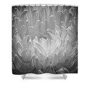 Chrysanthemum - 2 Shower Curtain