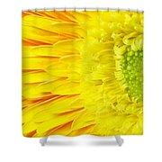 Chrysanthemum Flower Closeup Shower Curtain