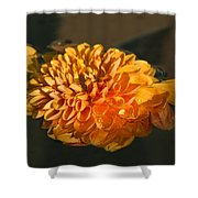 Chrysanthemum Gently Floating In The Fountain Of Campo De Fiori - Rome - Italy Shower Curtain