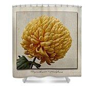 Chrysanthemum Grandiflorum Yellow Shower Curtain by John Edwards