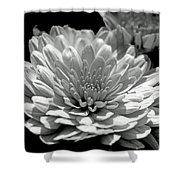 Chrysanthemum In Light And Shadow Shower Curtain
