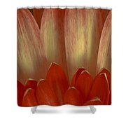 Chrysanthemum Pedals Shower Curtain