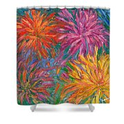 Chrysanthemums Like Fireworks Shower Curtain