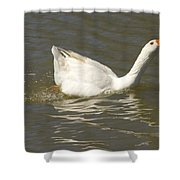 Chuck The Duck Looking At You Shower Curtain
