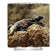 Chucka Walla Basking Shower Curtain