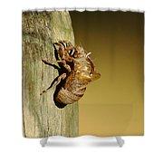 Cicada Shell Shower Curtain