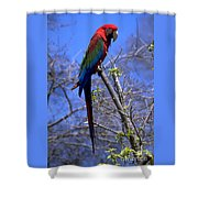 Cincy Parrot Shower Curtain