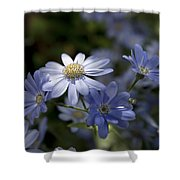 Cineraria  1217 Shower Curtain by Terri Winkler