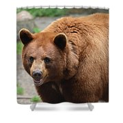 Cinnamon Black Bear Shower Curtain