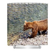 Cinnamon-colored Grizzly Bear By Moraine River In Katmai Np-ak  Shower Curtain