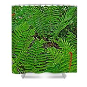 Cinnamon Ferns Along Skyline Trail In Cape Breton Highlands Np-n Shower Curtain
