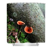 Cinnamon Polypore  Shower Curtain