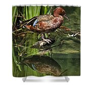 Cinnamon Teal Duck With Reflection Shower Curtain