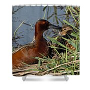 Cinnamon Teal Shower Curtain