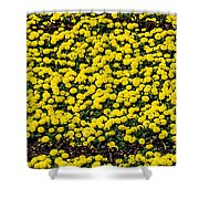 Circle Of Beauty Shower Curtain