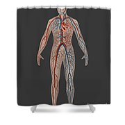 Circulatory System In Female Anatomy Shower Curtain