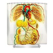 Circulatory System Shower Curtain