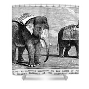 Circus Elephants, 1884 Shower Curtain