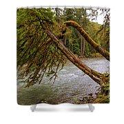 Cispus River At Iron Creek - Washington State Shower Curtain