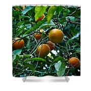 Citrus Sinensis Shower Curtain