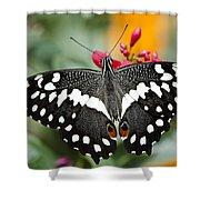 Citrus Swallowtail Butterfly  Shower Curtain