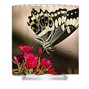 Citrus Swallowtail  Shower Curtain