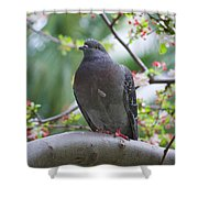 City Bird Shower Curtain