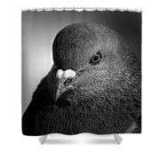 City Bird Gang Leader Shower Curtain