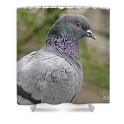 City Pigeon Shower Curtain