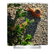 City Snail From Above Shower Curtain