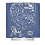 Cladosiphon Decipiens Shower Curtain by Aged Pixel