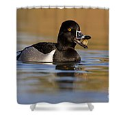 Clams For Breakfast Shower Curtain