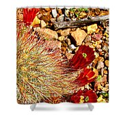 Claret Cup Cactus On Panther Junction Nature Trail In Big Bend National Park-texas Shower Curtain
