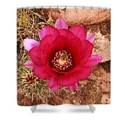Claret Cup Cactus On Red Rock In Sedona Shower Curtain