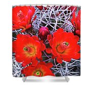 Claretcup Cactus Blooms Shower Curtain