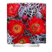 Claretcup Cactus In Bloom Wildflowers Shower Curtain