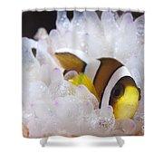 Clarks Anemonefish In White Anemone Shower Curtain